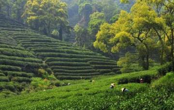 Meijiawu Tea Village