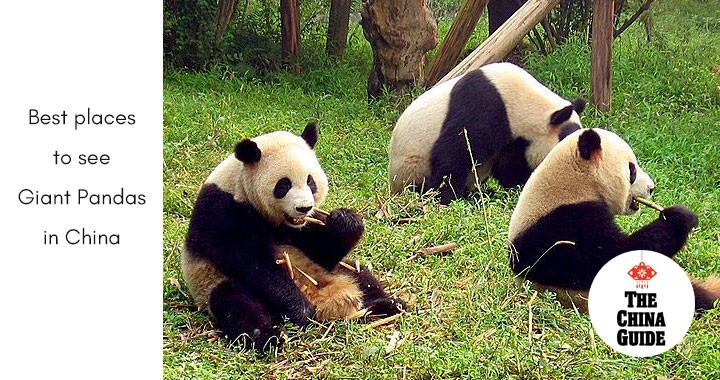 ​Best Places to See Giant Pandas in China
