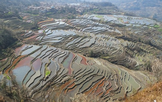 LaoyingzuiRiceTerraces'540x340'1