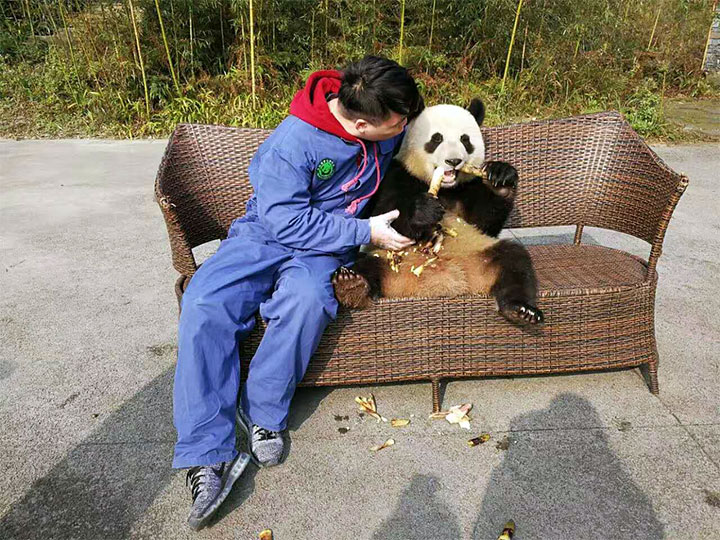 traveler with giant panda