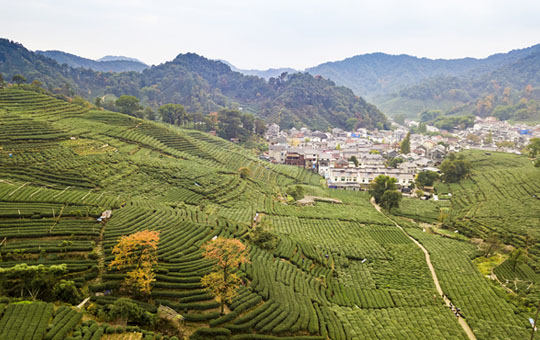 Visit a tea plantation to learn how local farmers grow and produce tea